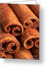 Cinnamon - Cinnamomum Greeting Card