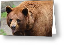 Cinnamon Black Bear Greeting Card