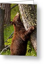Cinnamon Boar Black Bear Greeting Card