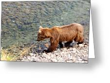 Cinnamon-colored Grizzly Bear By Moraine River In Katmai Np-ak  Greeting Card