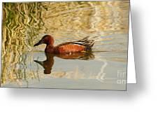 Cinnamon Teal Greeting Card