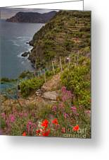 Cinque Terre Terraces In Spring Greeting Card