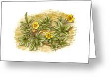 Cinquefoil (potentilla Reptans), Artwork Greeting Card