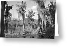 Circle B Swamp Greeting Card