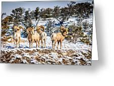 Circling The Wagons Greeting Card
