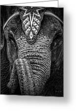 Circus Elephant Greeting Card by Bob Orsillo