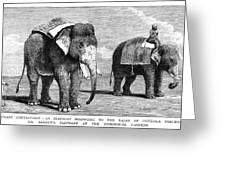 Circus Elephants, 1884 Greeting Card