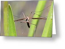 Cirque Du Soleil - Crane Fly Style Greeting Card
