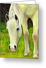 Cisco Sees Horse Art Greeting Card
