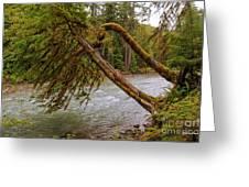 Cispus River At Iron Creek - Washington State Greeting Card