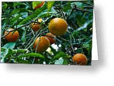 Citrus Sinensis Greeting Card