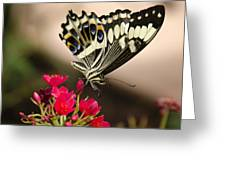 Citrus Swallowtail  Greeting Card