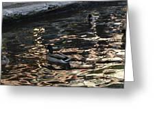 City Ducks 2  Greeting Card