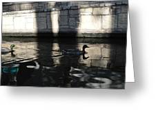 City Ducks Greeting Card