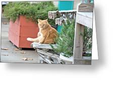 City Kitty Greeting Card