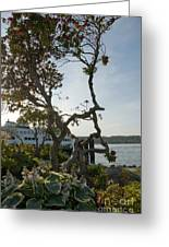 City Of Bremerton Waterfront Park Greeting Card