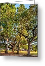 City Park Oaks Greeting Card