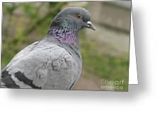 City Pigeon Greeting Card