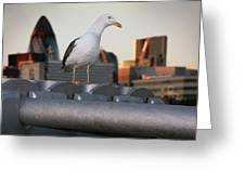 City Seagull Greeting Card by Stephen Norris