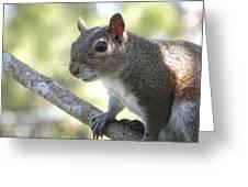 City Squirrel On The Hunt Greeting Card by Belinda Lee