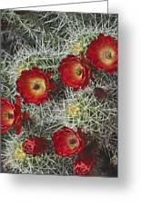 Claret Cactus - Vertical Greeting Card by Gregory Scott