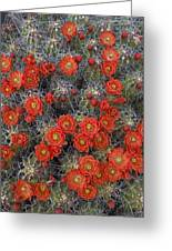 Claret Cup Cactus Flowers Detail Greeting Card