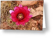 Claret Cup Cactus On Red Rock In Sedona Greeting Card