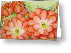 Claret Cups Greeting Card