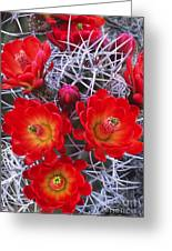 Claretcup Cactus In Bloom Wildflowers Greeting Card