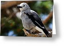 Clark's Nutcracker Greeting Card