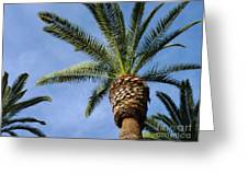 Classic Palms Greeting Card