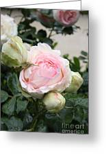 Classic Rose Greeting Card