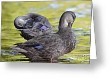 Ducks On Green Greeting Card