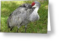 Cleaning  Feathers Greeting Card