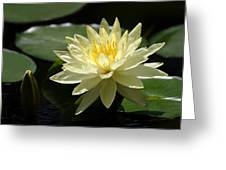 Clear Yellow Water Lily And Bud Greeting Card