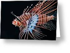 Clearfin Lionfish Greeting Card