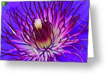 Clematis 1 Greeting Card