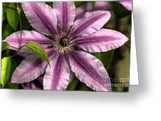 Clematis And Leaf Greeting Card