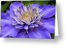 Clematis Blue Greeting Card