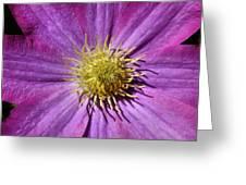 Clematis Center Greeting Card