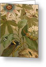 Clematis Cicada And Beetles 1894 Greeting Card