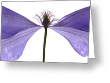 Clematis Float Greeting Card