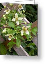 Clematis Grace Greeting Card