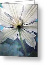 Clematis In Morning Sun Greeting Card