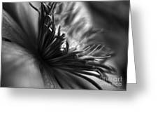 Clematis Macro In Black And White Greeting Card