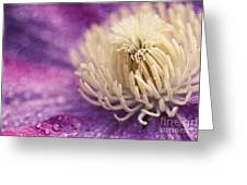 Clematis-macro Photograph Of A Purple Clematis Greeting Card