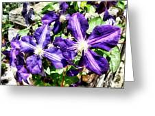 Clematis On A Stone Wall Greeting Card