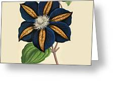 Clematis Star Of India Greeting Card