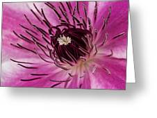 Clematis Up Close Greeting Card