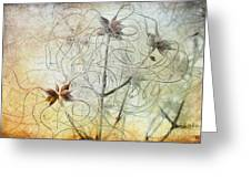 Clematis Virginiana Seed Head Textures Greeting Card